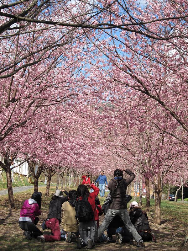 武陵農場看櫻花之旅~~