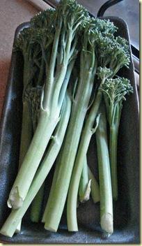 Broccolini raaka 1