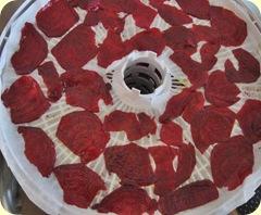 punajuuri kuivurissa