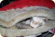 sleepinggwen