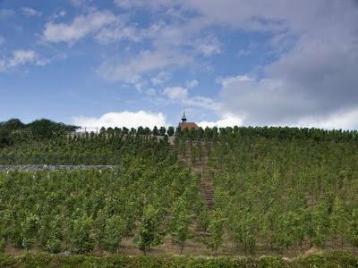 Виноградники в Празі