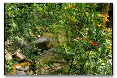 TMKH_030_thommankuth_kerala_keralapix.com_DSC0003