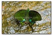 TMKH_053_thommankuth_kerala_keralapix.com_DSC0091