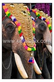 TPRA_002_DSC0023_www.keralapix.com_kerala