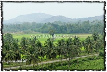 PLKD_013_www.keralapix.com_DSC0321