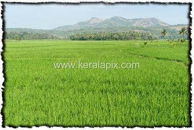PLKD_002_www.keralapix.com_DSC0003