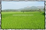 PLKD_005_www.keralapix.com_DSC0007