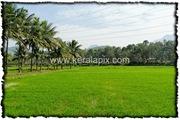 PLKD_008_www.keralapix.com_DSC0015