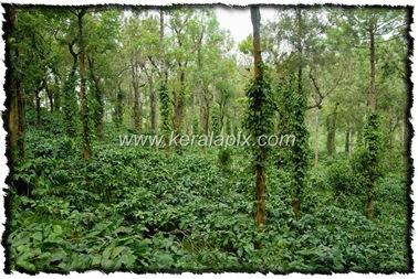 NLPY_020_www.keralapix.com_DSC0075