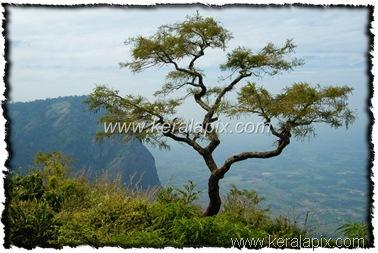 NLPY_040_www.keralapix.com_DSC0123