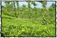NLPY_044_www.keralapix.com_DSC0109