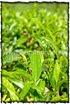 NLPY_045_www.keralapix.com_DSC0111