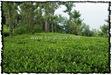 NLPY_052_www.keralapix.com_DSC0249
