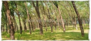CHMNY_002_www.keralapix.com_DSC0008_DSC0009