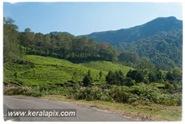 PCM_020_DSC0051-2_Marayoor_Munnar_www.keralapix.com