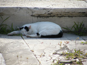093 - Gato en el Ágora romana.JPG