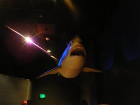 167 - El tiburón blanco.JPG