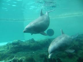 270 - Delfines.JPG
