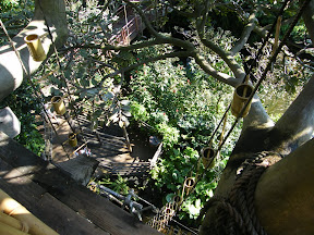 463 - Swiss Family Treehouse.JPG