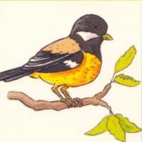 Aves (78).jpg