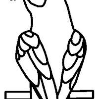 Aves (76).jpg