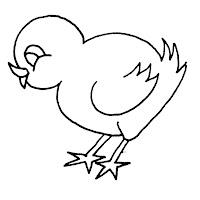 Aves (10).jpg