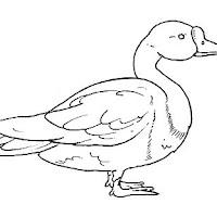 Aves (101).jpg