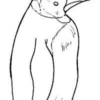 Aves (94).jpg