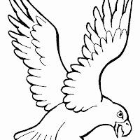 Aves (5).jpg
