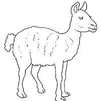 Mamíferos (171).jpg