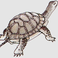 Reptiles (27).jpg