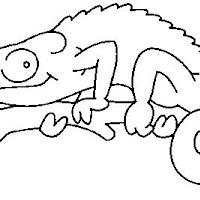 Reptiles (5).jpg