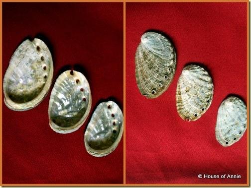 KCC Farmers Market Kona Coast Abalone shells