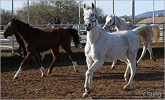 1 Rose Queen and Monique Feb 21 2011 059