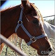 feb 21  (10) ALI's Horses and Property 044