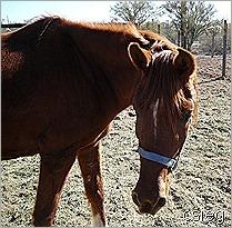 feb 21  (10) ALI's Horses and Property 043