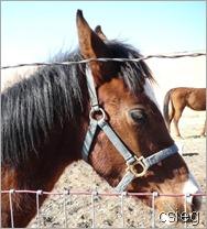 feb 21  (10) ALI's Horses and Property 077