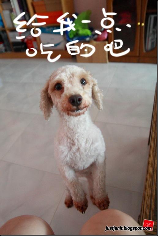 _ Doggie_2009.08.06_0059_resize