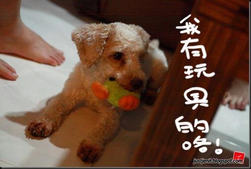 _ Doggie_2009.08.05_0042