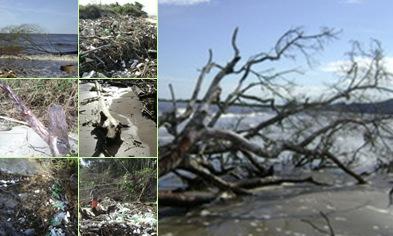 Exibir Imagens dos descartes - da Natureza e do Homem!
