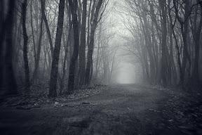в лес..