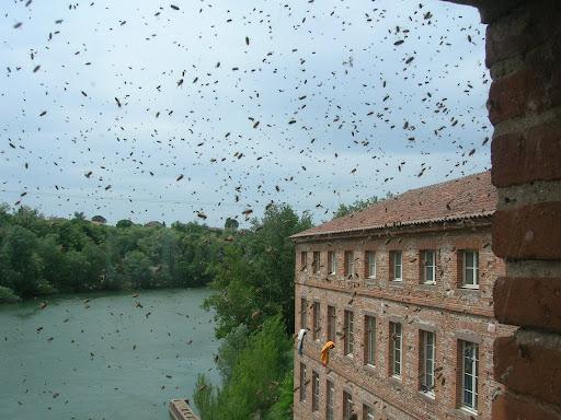 Colonie d'abeilles