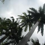 Diese Palmen sind echt riesig!