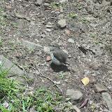 Zutraulicher Vogel