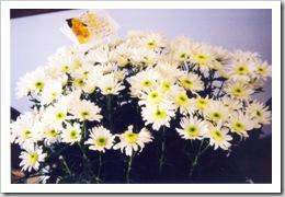 Josephine's daisies 7-03-03
