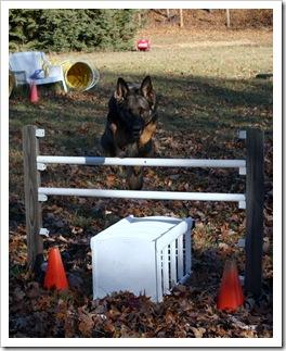 2009.11.17 Dogs in Yard-3