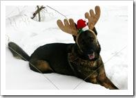 2009 Christmas-5