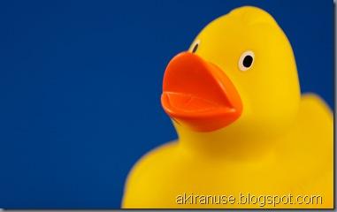 01101_ducky_2560x1600