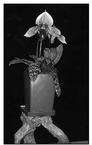 Placing plants on pedestals and inserting their growing pot inside a more ornamental one draws attention to the best attributes of the orchids — their flowers.
