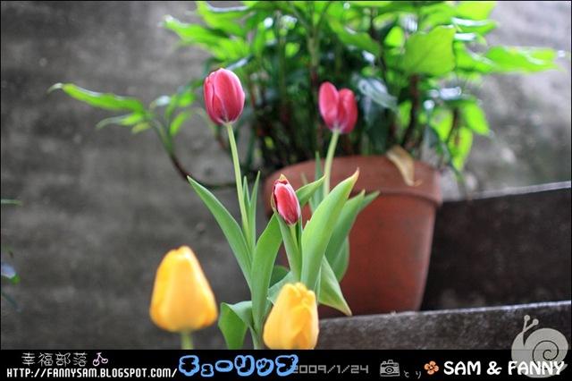 Blog_DPP_0050
